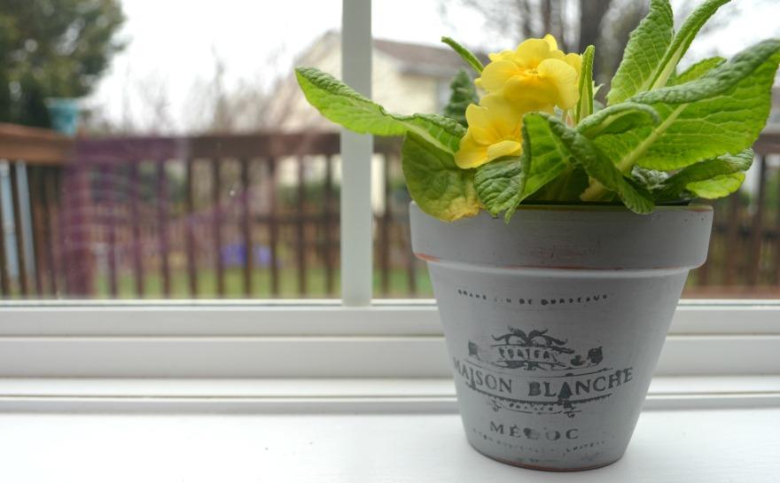 Vintage Chic Stenciled Flowerpot